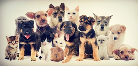 RecT: The Pawsabilities of Animal Assisted Therapy